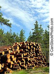 été, coupure, forêt pin, pile, bois construction