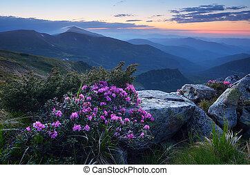 été, crépuscule, montagnes