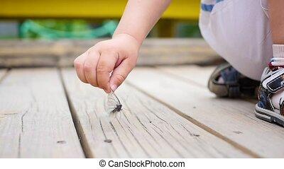 été, dehors, ensoleillé, day., jeux, enfant, amusement, jouer, butterfly.