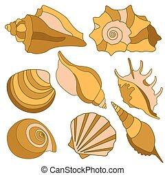 été, elements., shells., fetes, vecteur, conception, mer