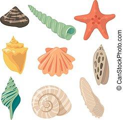été, ensemble, coquilles, images, dessin animé, exotique, vecteur, objects., marin, style.