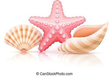 été, ensemble, mer, etoile mer, coquilles