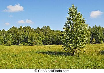 été, ensoleillé, forêt, clairière