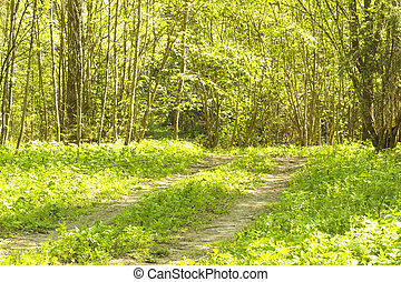 été, ensoleillé, matin, forêt verte, route