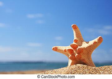 été, etoile mer