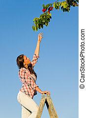 été, femme, atteindre, cerisier, élevé, branche