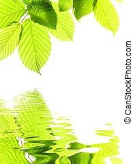 été, feuilles, vert