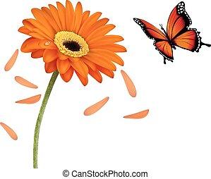 été, fleur, illustration., nature, vecteur, orange, butterfly.