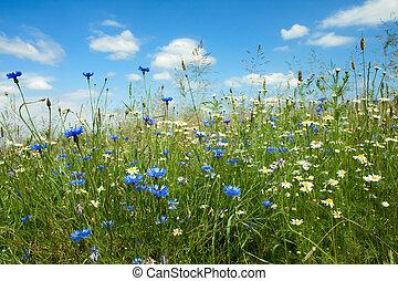 été, fleurs, champ