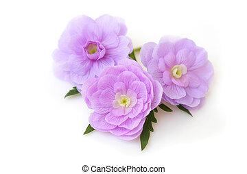 été, fleurs, cieux