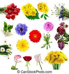été, fleurs, collection