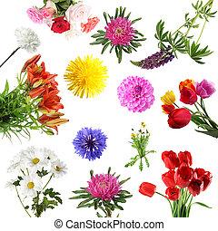 été, fleurs, collections