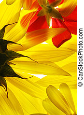 été, fleurs, jaune rouge, arrière-plan.