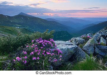 été, fleurs, montagnes