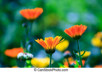 été, fleurs