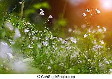 été, fleurs, pré