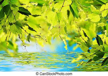 Été, fond,  nature