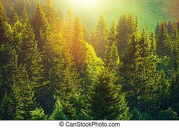 été, forêt, alpin