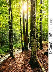 été, forêt, lumière soleil