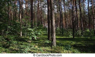 été, forêt, moule