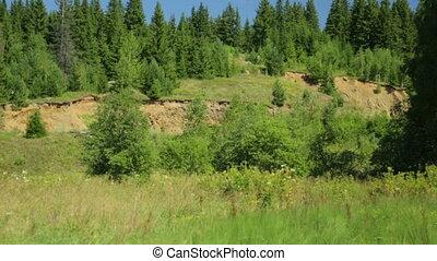 été, forêt, paysage