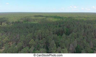 été, forêt, pin, aérien