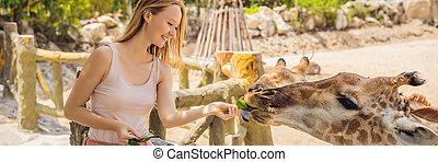 été, girafe, regarder, safari, jour, amusement, bannière, alimentation, zoo., animaux, format, parc, long, heureux, chaud, avoir, femme, elle