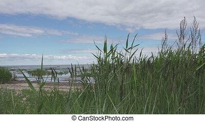 été, golfe, finlande, ensoleillé, côte, panoramique, jour, pierreux, vue