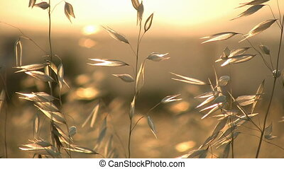 été, herbe
