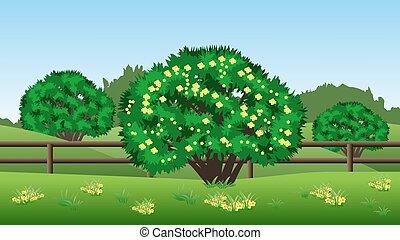 été, herbe, collines, arbres, vert jaune, fond, fleurs, paysage