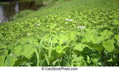 été, herbe, ensoleillé, forêt verte, rivière, jour, banque