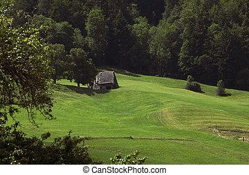 été, herbe, vieux, pré, vibrant, grange, forest., vert, rural, switzerland., paysage, vue