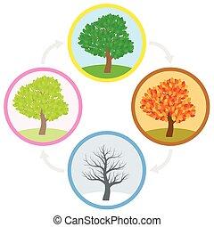 été, hiver, printemps, annuel, arbre, automne, cycle