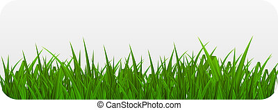 été, illustration., résumé, grass., vecteur, fond