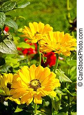été, jardin fleur, fond jaune, fleur