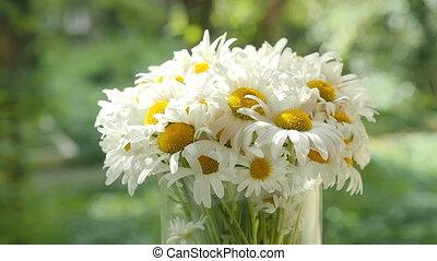 été, jeu, fleurs, wind., verre, bouquet, lumière, moyenne, mouvement, brouillé, foyer., pétales, fond, fenêtre., pâquerette, camomiles, ombre, vase, doux, plan