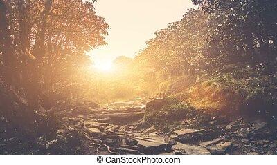 été, magestic, conte, forêt, fée, paysage