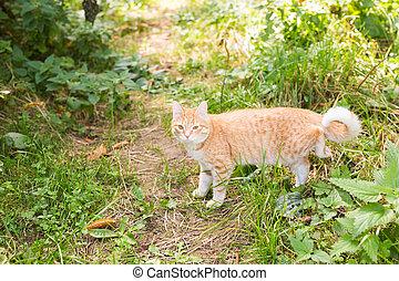 été, marche, chat, herbe verte, jour