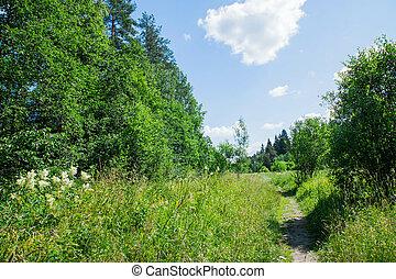 été, marche, clair, jour, forêt