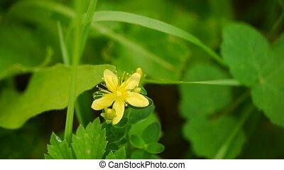 été, nature, printemps, jaune, arrière-plan., flowers., fleurs