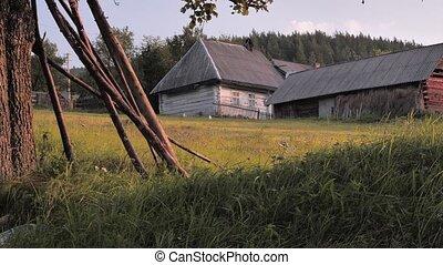 été, non, herbe, vieux, business, urbain, yard, yard., dos, ...