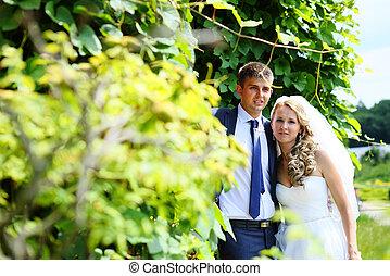 été, parc, nouveaux mariés