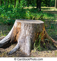 été, park., souche, arbre