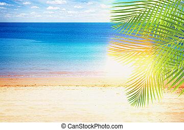 été, paumes, plage