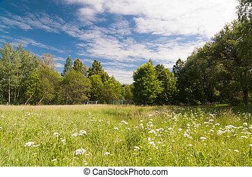 été, paysage, nature