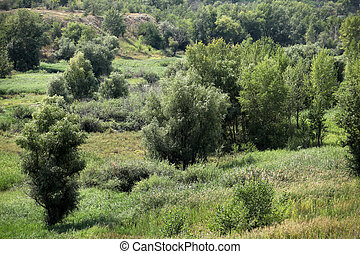 été, paysage vert, vallonné