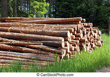 été, pile, journaux bord, forêt pin