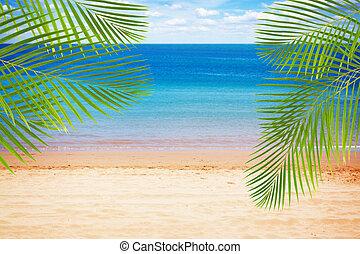 été, plage, paumes