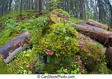 été, pluvieux, journaux bord, mousse-couvert, forêt, jour
