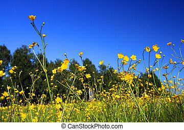 été, pré, à, fleurs